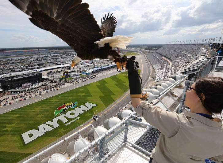 Julia Cecere, with the American Eagle Foundation, practices with 'Challenger,' an American Bald Eagle, before the Daytona 500 race on Sunday, Feb. 21, 2015