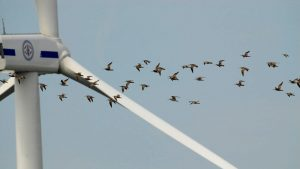Wind turbines are a danger to birds.