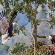 Bringing greenery to the eagle nest.