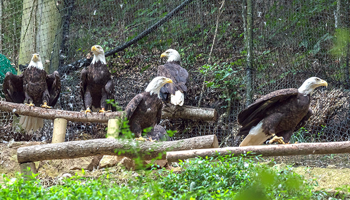 AEF Eagle Mountain Sanctuary