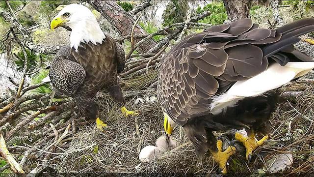 First feeding