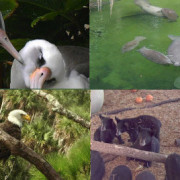 Critter Cams recognized