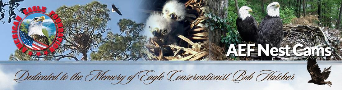 AEF Nest Cams