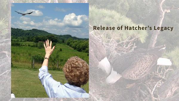 Hatcher_slider10