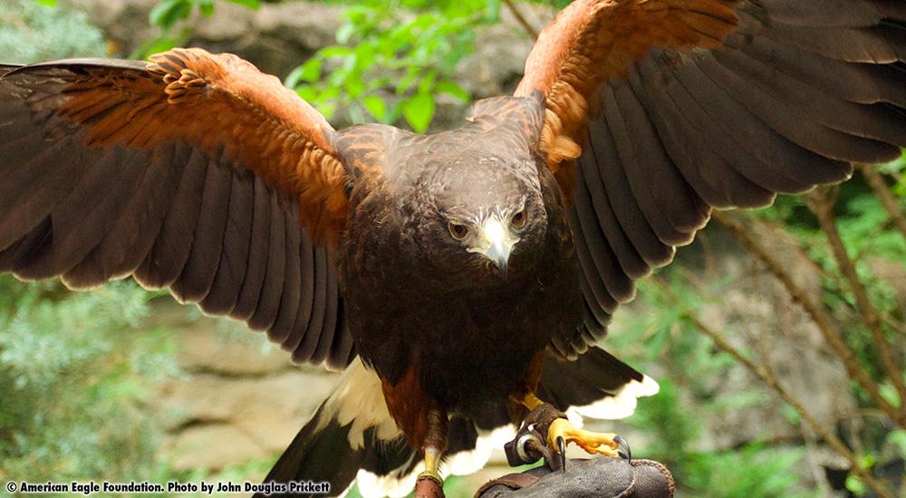 Maverick American Eagle Foundation
