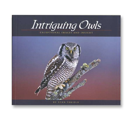 Intriguing Owls