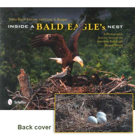 Inside a Bald Eagle's Nest