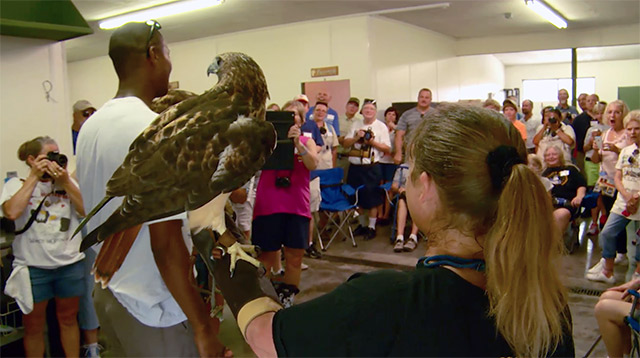 Christian Knatt and the Red-tailed Hawk captivate the Chatters.
