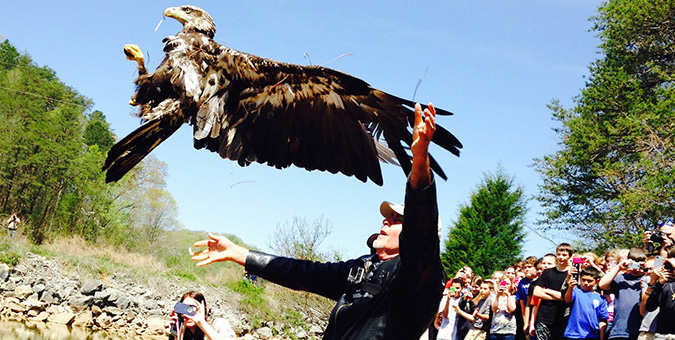 Rehabbed eagle release