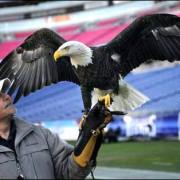 Al Cecere & Bald Eagle Challenger