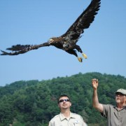 The release of a rehabbed bald eaglet