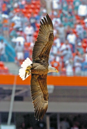 Challenger flies at Titans - Dolphins game