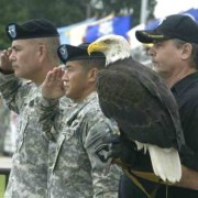 Bald Eagle Mr. Lincoln with 101st Screaming Eagles