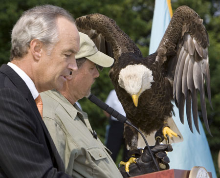 US interior secretary Dirk Kempthorne (L) makes an announcement beside Challenger, a bald eagle, during a ceremony held at the Jefferson Memorial in Washington, June 28, 2007. The American bald eagle, pushed to near-extinction in the United States by the pesticide DDT, is now recovered and will be removed from the Endangered Species list, the US interior secretary said on Thursday. [Reuters]