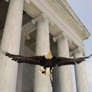 Challenger the bald eagle at the Jefferson Memorial