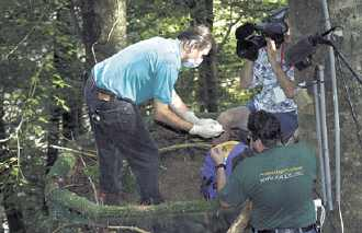 Checking a baby eaglet.