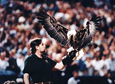 Challenger the eagle
