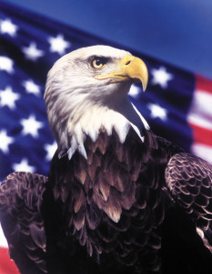 Challenger the Eagle in front of Flag
