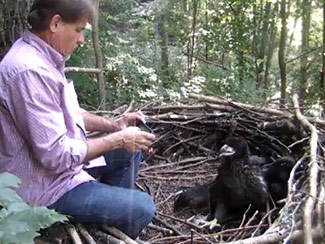 June 15: Then takes photo of second eaglet. The eaglet seems more curious than scared, and does not appear at all disturbed by the activity.