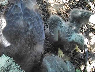 May 25 - Stretching wings - growing bigger.