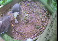 2nd egg removed from nest