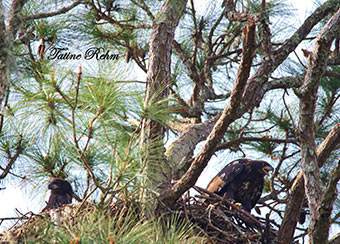 Back from adventures in the sky, Sam and Del are seen together in the nest for the last time on April 7, 2014