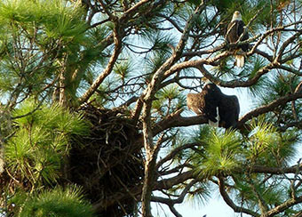 The home of Romeo and Juliet - They returned to their nest August 28, 2013