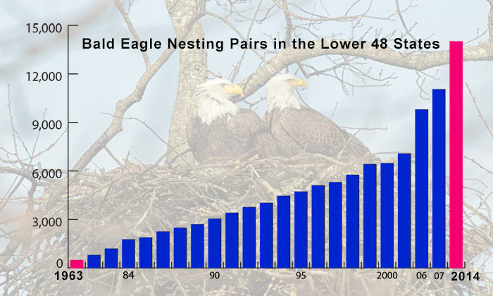 Decline & Recovery of the Bald Eagle. © American Eagle Foundation.