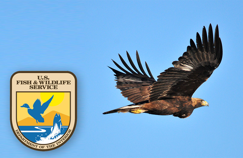 The Golden Eagle is protected by the Bald and Golden Eagle Protection Act and by the Migratory Bird Treaty Act.