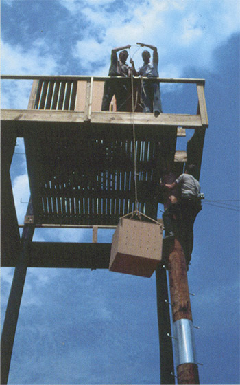 Hack towers were important in restoring the bald eagle in Tennessee and across the nation.