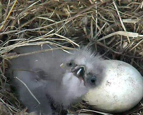 Meet the Operator of the Bald Eagle Live Cam
