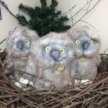 Plush Baby Great Horned Owl American Eagle Foundation