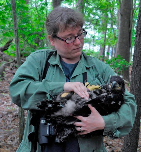 Michael Wright holds a bald eagle nestling.