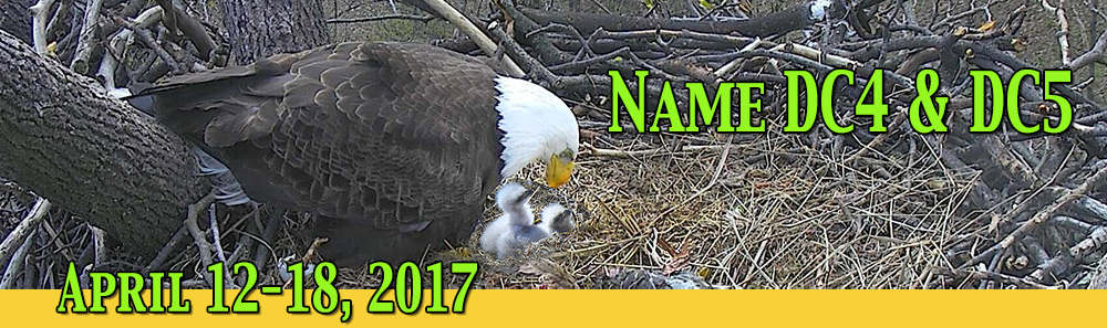 Name the DC Nestlings