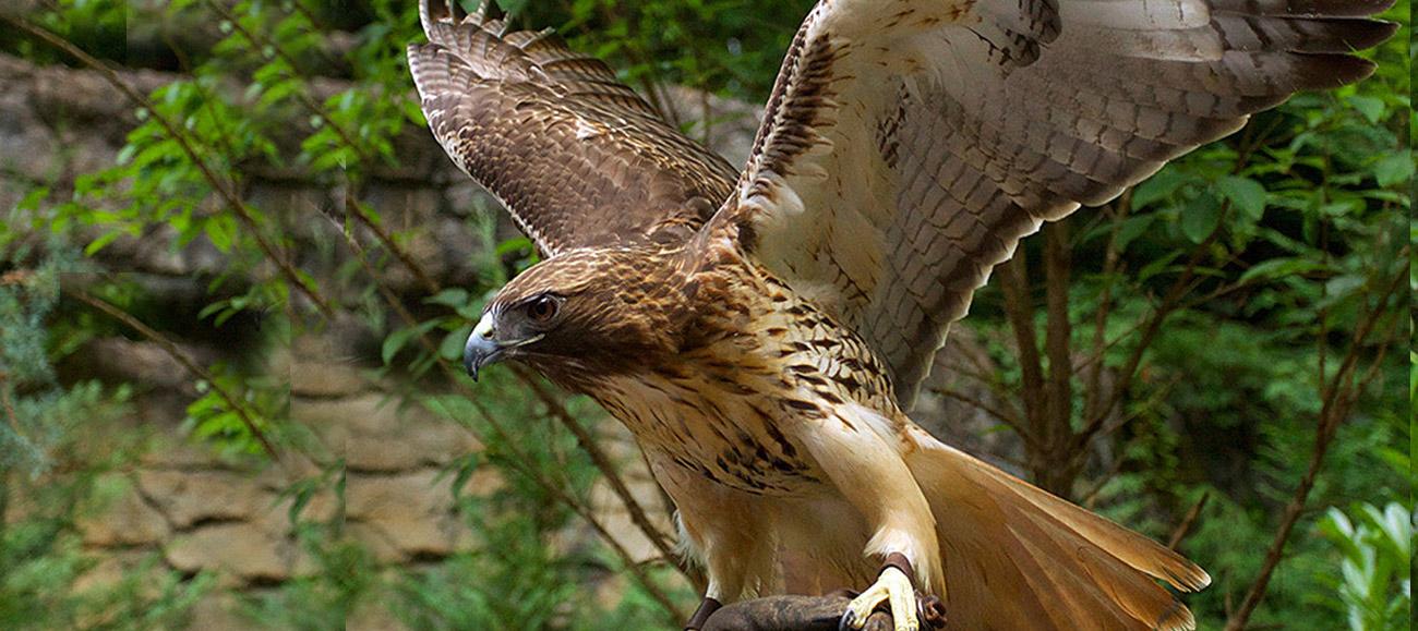 Dollywood Eagle Cam