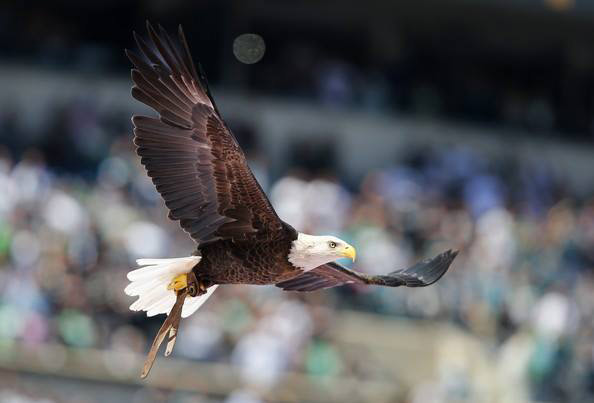 Challenger soars over a field-sized American flag during the National Anthem at Lincoln Financial Field