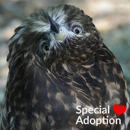 Adopt Goose
