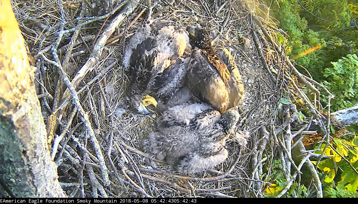 A pinwheel in the nest!