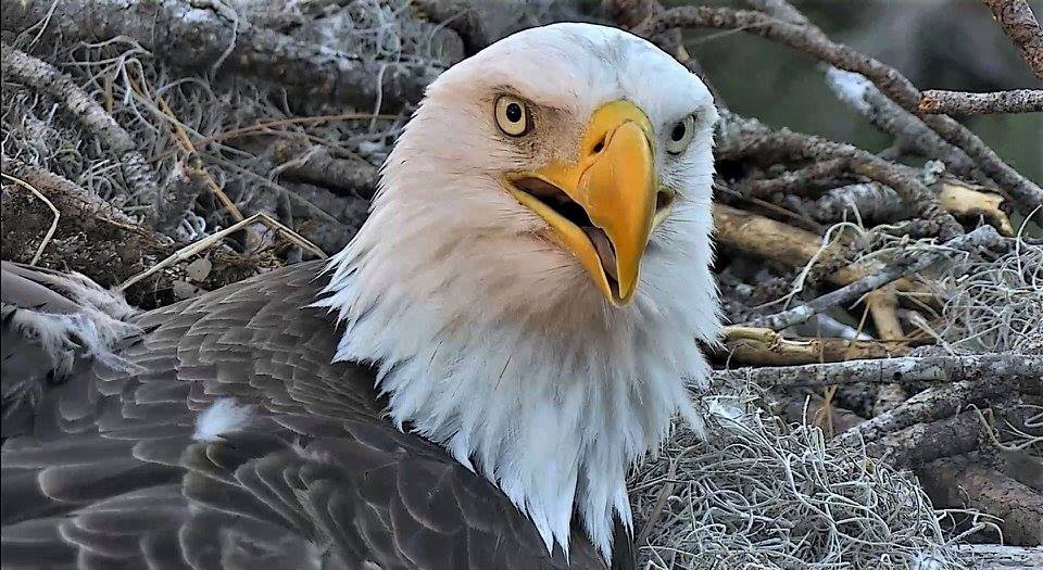 9895afc1 Timeline – American Eagle Foundation