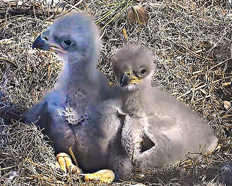 Name the NEFL Nestlings – Open to All AEF Members!